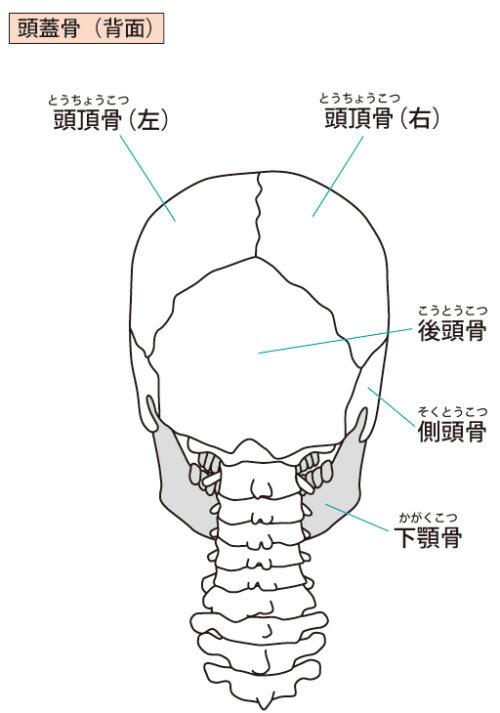 頭蓋骨後面