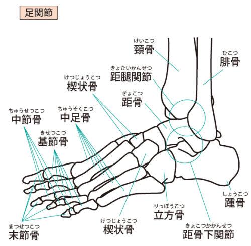 足関節(横面)