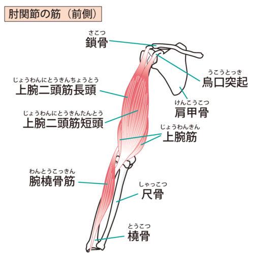 上肢前面の筋肉