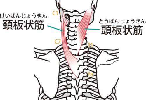 頚部後面深層の筋