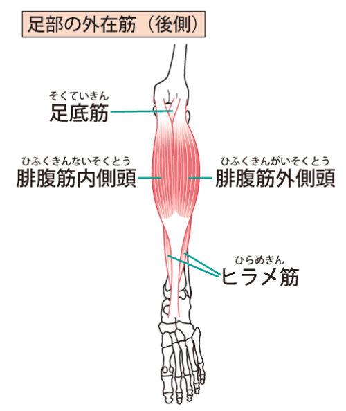 下腿後面の筋肉