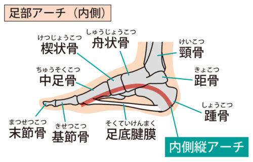 足のアーチ(内側)