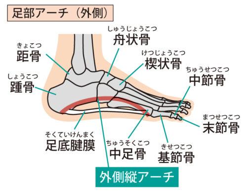 足のアーチ(外側)
