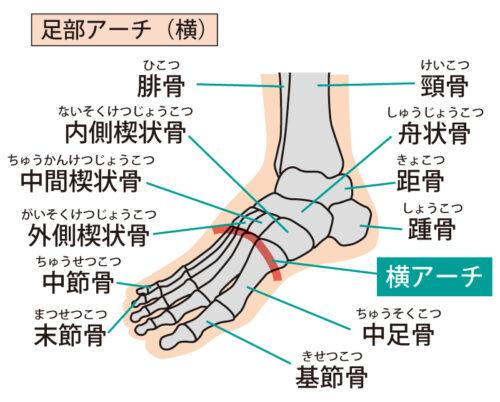 足のアーチ(横)