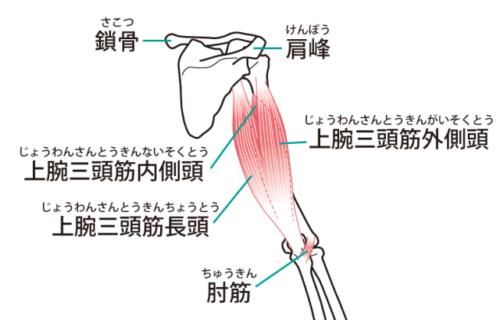 上腕後面の筋肉