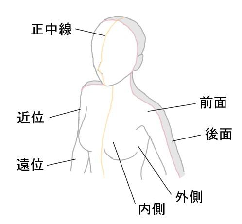 人体の方向の表し方